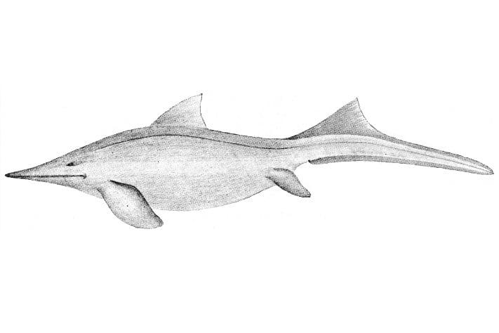 711x474_Mixosaurus-nordenskioldi(Wiman-1910-rekonstruksjon)