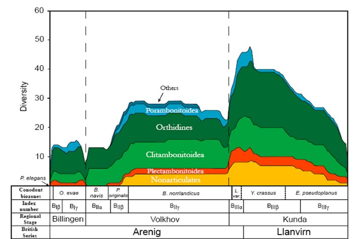 Graph of the brachiopod diversity through the Volkhov and Kunda stages in western Russia; the major jump in diversity began at the Volkhov/Kunda boundary. Courtesy of Christian Mac Ørum Rasmussen, University of Copenhagen