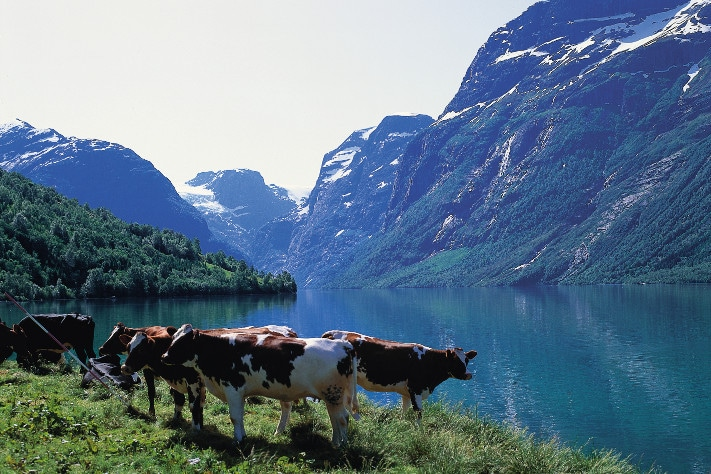 711x474_Fjordlandskapet