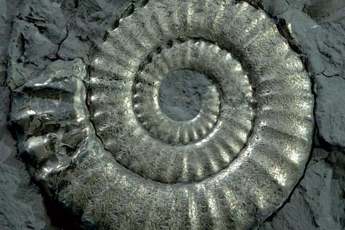 Livets historie – gjennom fire milliarder år