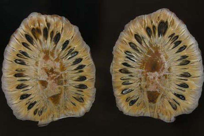 Jura 200 – 146 millioner år