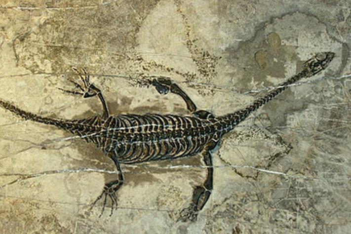 Trias 251 – 200 millioner år