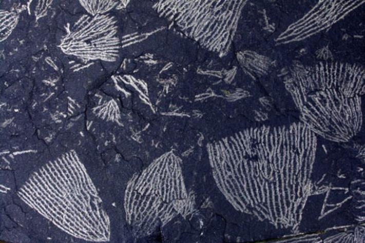 Ordovicium 488 – 444 millioner år