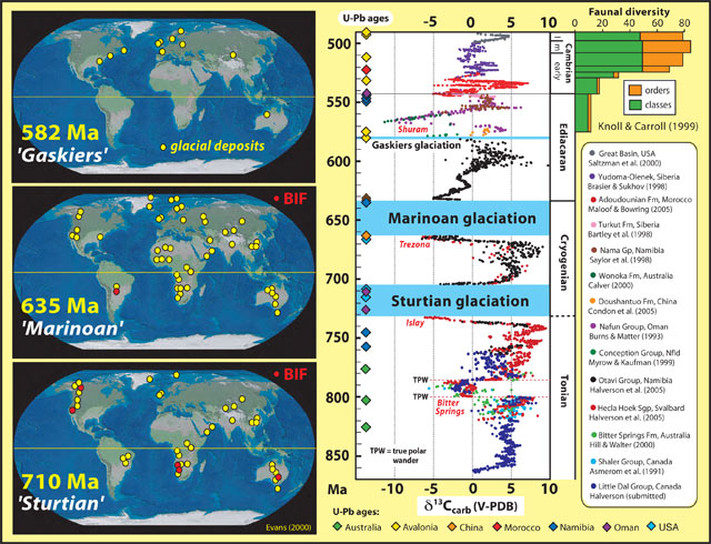 Present global distribution of Sturtian, Marinoan and Ediacaran glacial and glacial-marine deposits (left), and secular variation in the carbon isotopic composition (δ13C) of marine carbonates (right) from 860 to 490 Ma (modified after Halverson et al., 2005) and their relation to the three glacial epochs and early faunal diversification (after Knoll and Carroll, 1999).