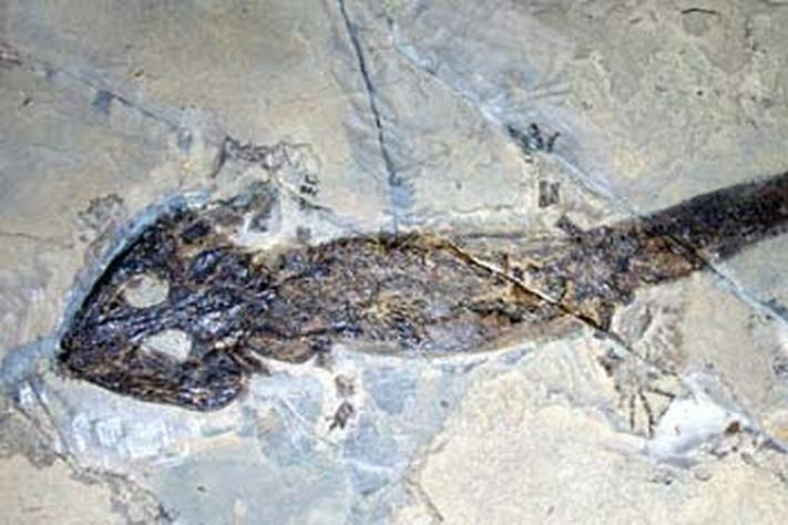 Perm 299 – 251 millioner år
