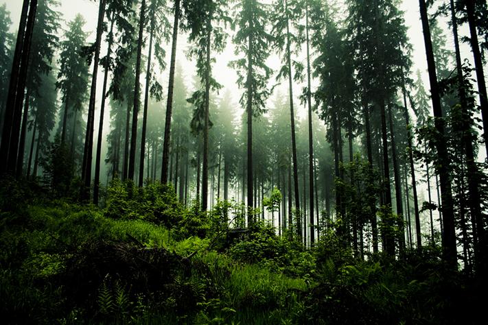 Vil ha grønn datalagring til Norge