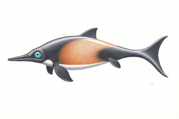 Oppdaget ny fiskeøgleart