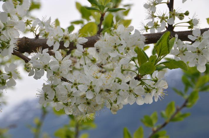 Spring MINIBreak