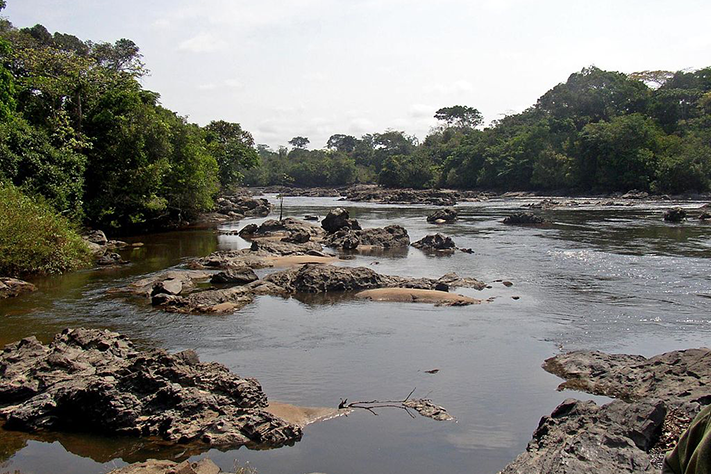 Gulljakten i Kongo