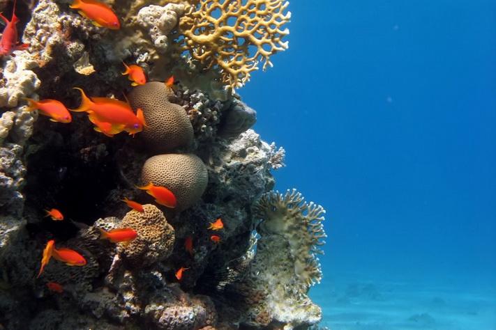 Truer klimaet korallrevene?